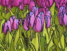 Tulip Impressions No3