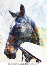 karen-smith_horse-digital-art