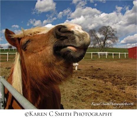 karen-smith_horse