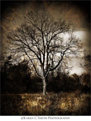 karen-smith_tree-digital-art
